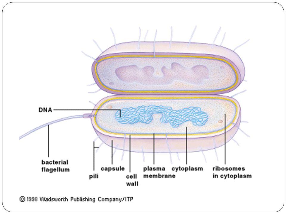 Genom: Kandungan genetik total pada set haploid kromosom pada eukariot Kromosom tunggal pada bakteri atau pada DNA atau RNA virus Material genetik pada organisme