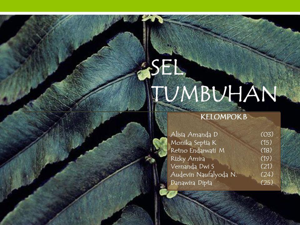 SEL TUMBUHAN KELOMPOK B Alisia Amanda D (03) Monika Septia K (15) Retno Endarwati M (18) Rizky Amira (19) Vernanda Dwi S (21) Audevin Naufalyoda N. (2