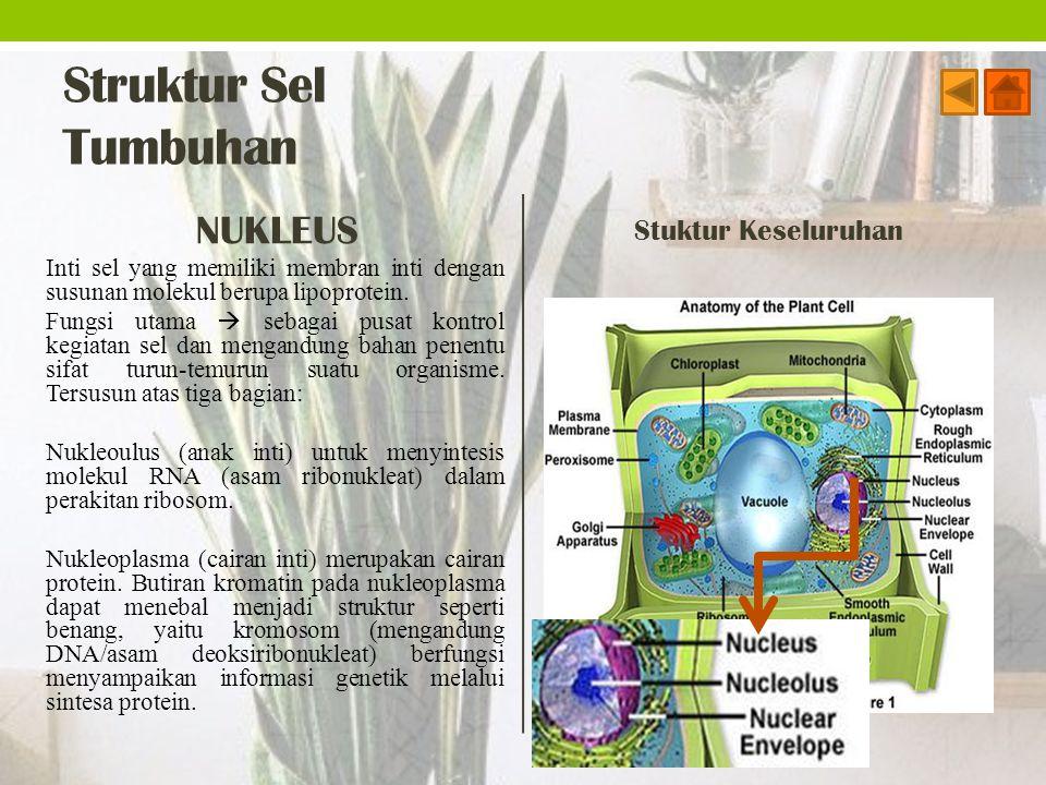 Struktur Sel Tumbuhan NUKLEUS Inti sel yang memiliki membran inti dengan susunan molekul berupa lipoprotein. Fungsi utama  sebagai pusat kontrol kegi