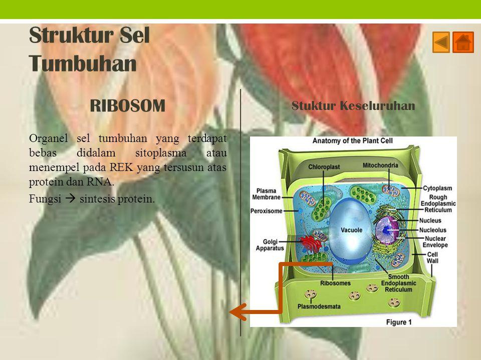 Struktur Sel Tumbuhan RIBOSOM Organel sel tumbuhan yang terdapat bebas didalam sitoplasma atau menempel pada REK yang tersusun atas protein dan RNA. F