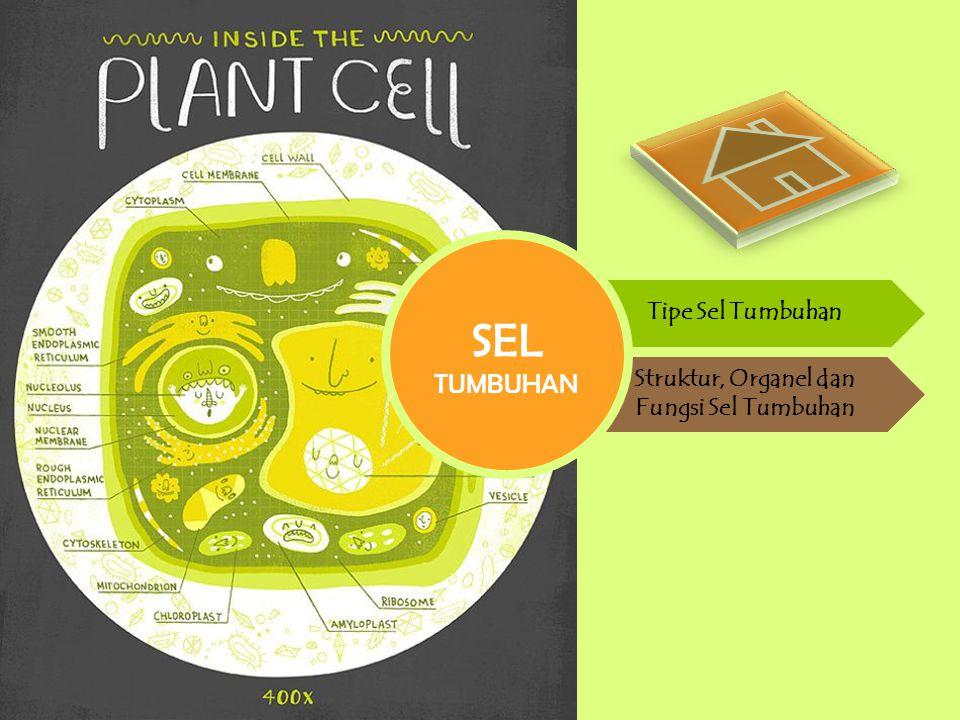 Tipe Sel Tumbuhan Struktur, Organel dan Fungsi Sel Tumbuhan SEL TUMBUHAN