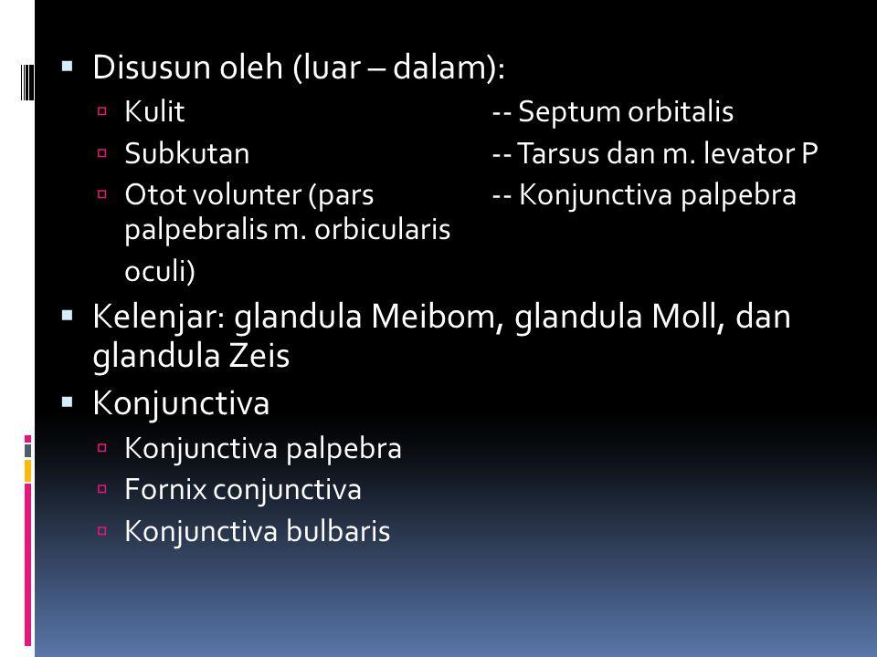  Disusun oleh (luar – dalam):  Kulit-- Septum orbitalis  Subkutan-- Tarsus dan m. levator P  Otot volunter (pars-- Konjunctiva palpebra palpebrali