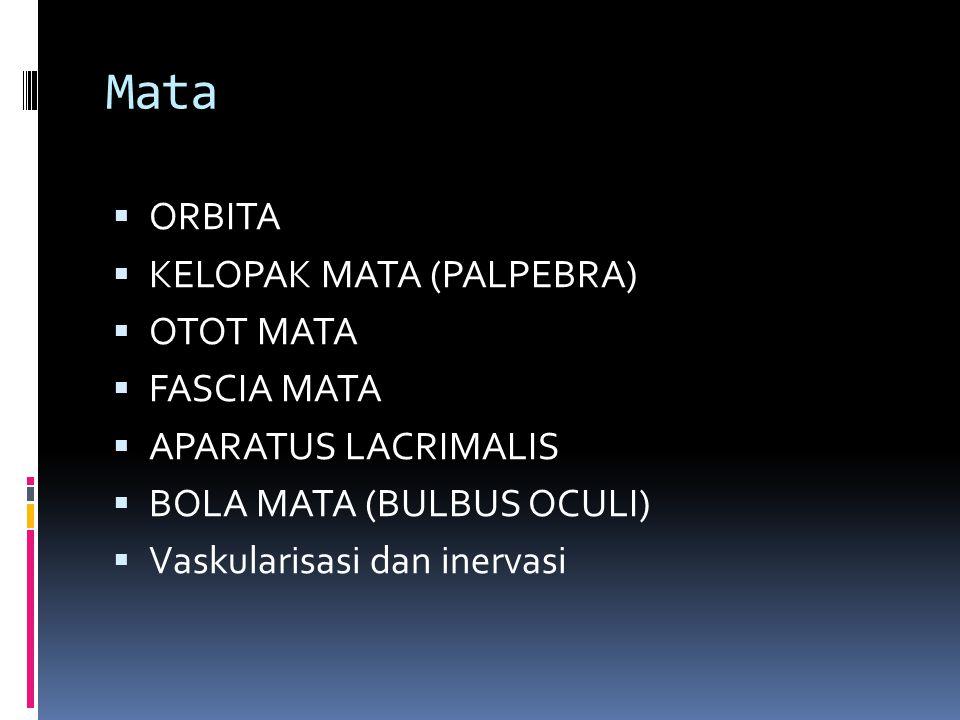 Mata  ORBITA  KELOPAK MATA (PALPEBRA)  OTOT MATA  FASCIA MATA  APARATUS LACRIMALIS  BOLA MATA (BULBUS OCULI)  Vaskularisasi dan inervasi