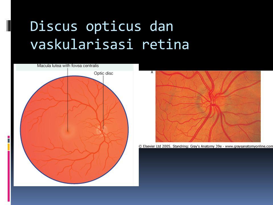 Discus opticus dan vaskularisasi retina