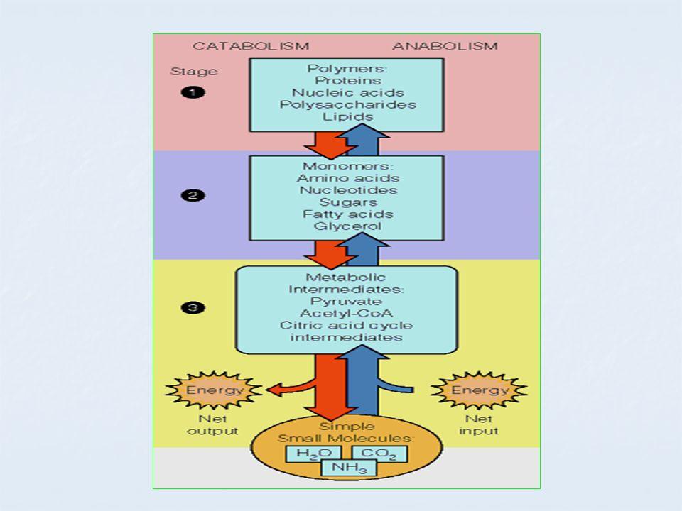 Step2 : Hidratasi Mengkatalisis hidrasi trans enoyl CoA Penambahan gugus hidroksi pada C no.