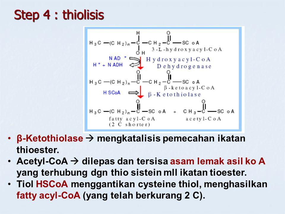 Step 4 : thiolisis β-Ketothiolase  mengkatalisis pemecahan ikatan thioester. Acetyl-CoA  dilepas dan tersisa asam lemak asil ko A yang terhubung dgn