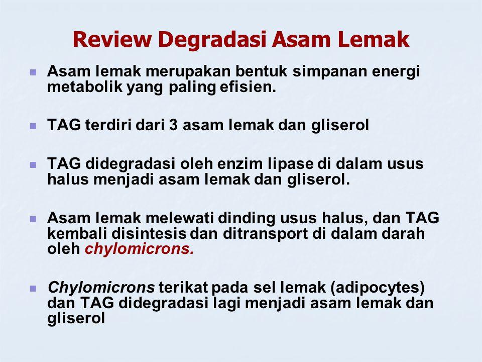 Review Degradasi Asam Lemak Asam lemak merupakan bentuk simpanan energi metabolik yang paling efisien. TAG terdiri dari 3 asam lemak dan gliserol TAG