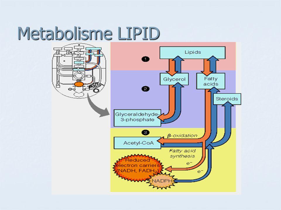 Degradasi Lipid  Oksidasi asam lemak Degradasi Lipid  Oksidasi asam lemak Pencernaan, penyerapan dan transpot lemak Pencernaan, penyerapan dan transpot lemak  -oksidasi asam lemak  -oksidasi asam lemak Biosintesis Lipid Biosintesis Lipid Biosintesis asam lemak Biosintesis asam lemak Biosintesis triasilgliserol Biosintesis triasilgliserol Biosintesis fosfolipid Biosintesis fosfolipid Biosintesis kolesterol dan steroid Biosintesis kolesterol dan steroid