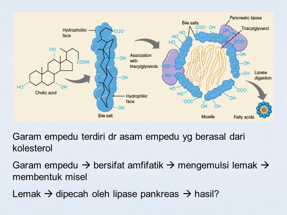 Garam empedu terdiri dr asam empedu yg berasal dari kolesterol Garam empedu  bersifat amfifatik  mengemulsi lemak  membentuk misel Lemak  dipecah