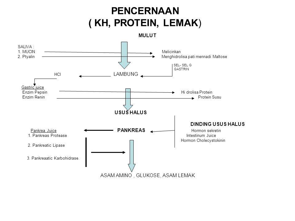PENCERNAAN ( KH, PROTEIN, LEMAK) MULUT SALIVA : 1. MUCIN Melicinkan 2. Ptyalin Menghidrolisa pati mennadi Maltose SEL- SEL G GASTRIN HCl LAMBUNG Gastr