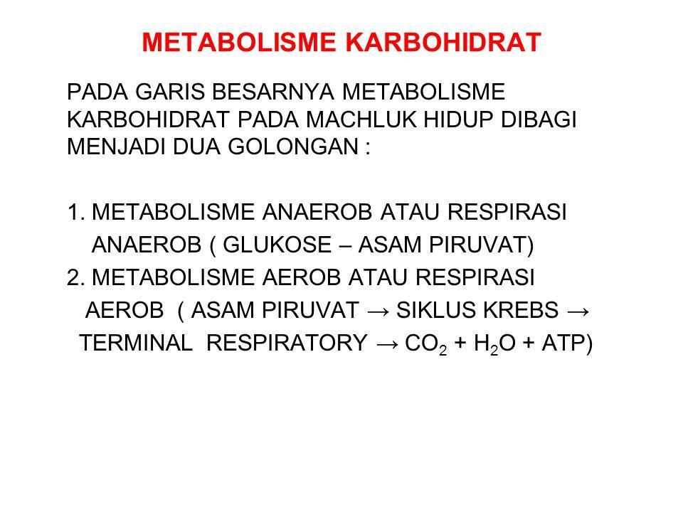 METABOLISME KARBOHIDRAT PADA GARIS BESARNYA METABOLISME KARBOHIDRAT PADA MACHLUK HIDUP DIBAGI MENJADI DUA GOLONGAN : 1. METABOLISME ANAEROB ATAU RESPI