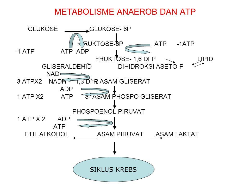 METABOLISME ANAEROB DAN ATP GLUKOSE GLUKOSE- 6P FRUKTOSE-6P ATP -1ATP -1 ATP ATP ADP FRUKTOSE- 1,6 DI P LIPID GLISERALDEHID DIHIDROKSI ASETO-P NAD 3 A