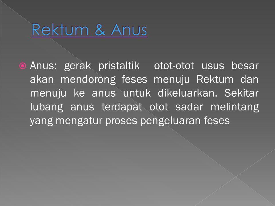  Anus: gerak pristaltik otot-otot usus besar akan mendorong feses menuju Rektum dan menuju ke anus untuk dikeluarkan. Sekitar lubang anus terdapat ot