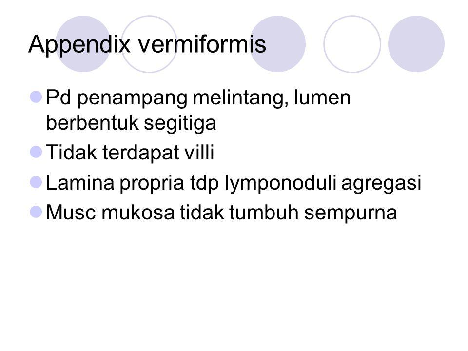 Appendix vermiformis Pd penampang melintang, lumen berbentuk segitiga Tidak terdapat villi Lamina propria tdp lymponoduli agregasi Musc mukosa tidak t