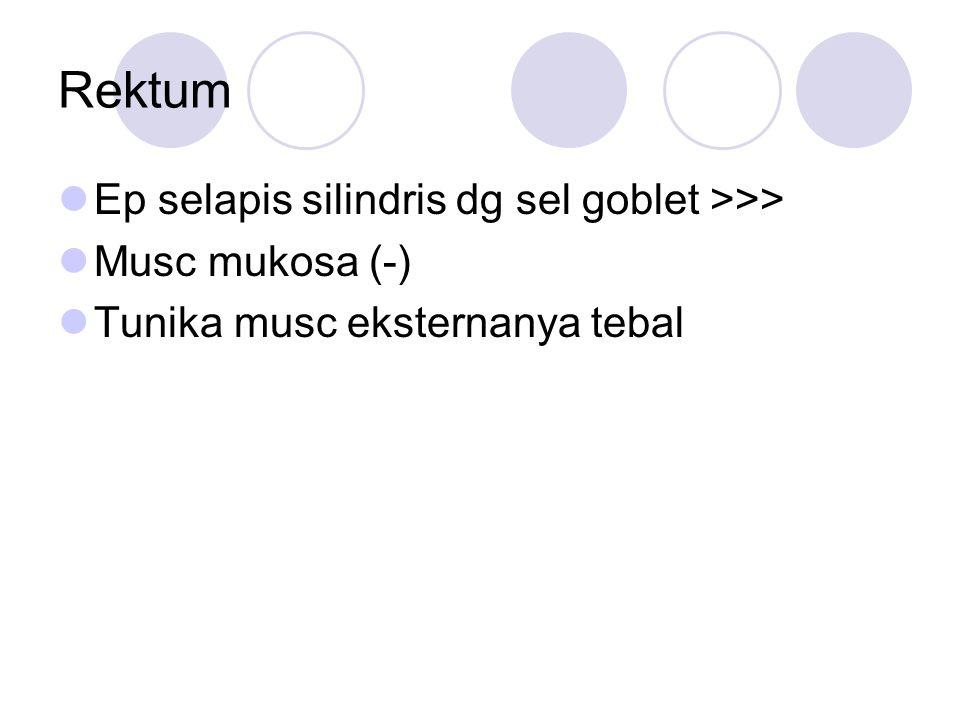 Rektum Ep selapis silindris dg sel goblet >>> Musc mukosa (-) Tunika musc eksternanya tebal