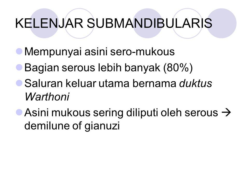 KELENJAR SUBMANDIBULARIS Mempunyai asini sero-mukous Bagian serous lebih banyak (80%) Saluran keluar utama bernama duktus Warthoni Asini mukous sering