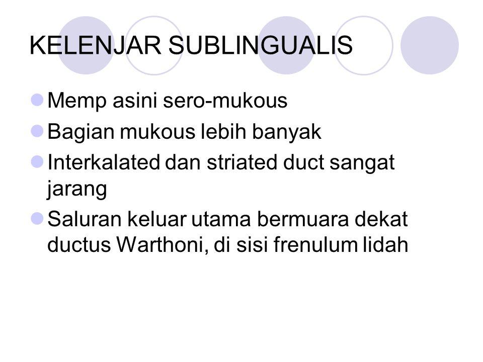 KELENJAR SUBLINGUALIS Memp asini sero-mukous Bagian mukous lebih banyak Interkalated dan striated duct sangat jarang Saluran keluar utama bermuara dek