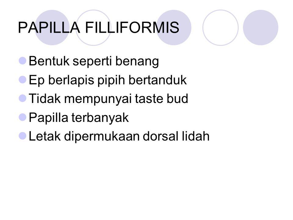 PAPILLA FILLIFORMIS Bentuk seperti benang Ep berlapis pipih bertanduk Tidak mempunyai taste bud Papilla terbanyak Letak dipermukaan dorsal lidah