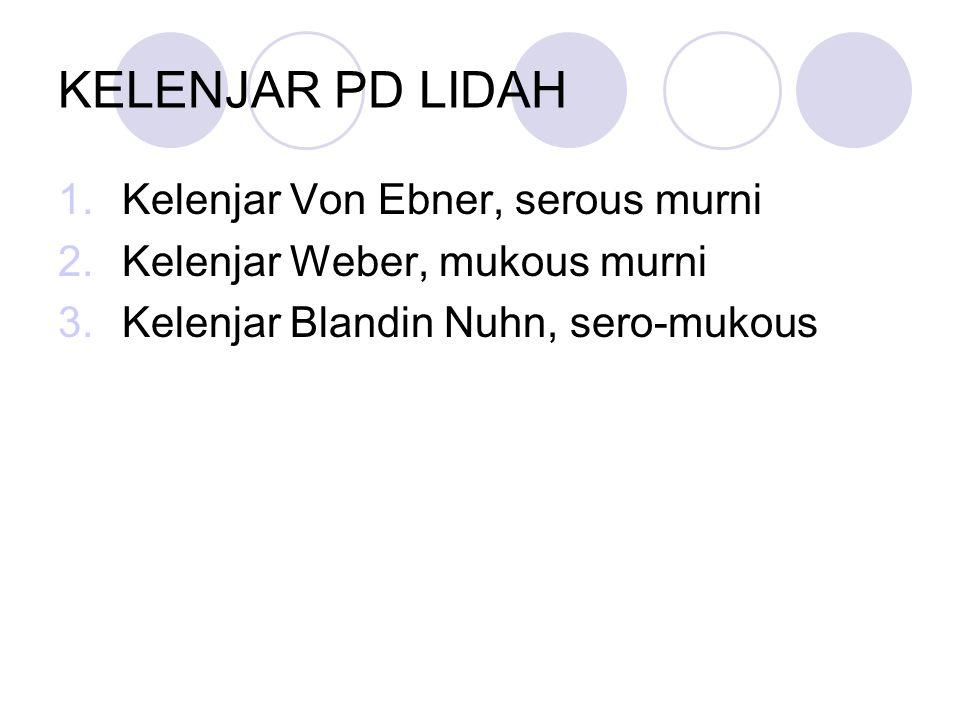 KELENJAR PD LIDAH 1.Kelenjar Von Ebner, serous murni 2.Kelenjar Weber, mukous murni 3.Kelenjar Blandin Nuhn, sero-mukous
