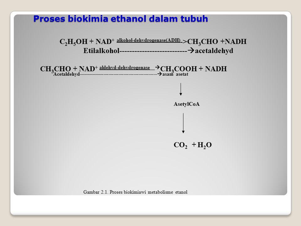 Proses biokimia ethanol dalam tubuh C 2 H 5 OH + NAD + alkohol-dehydrogenase(ADH) ->CH 3 CHO +NADH Etilalkohol---------------------------  acetaldehy
