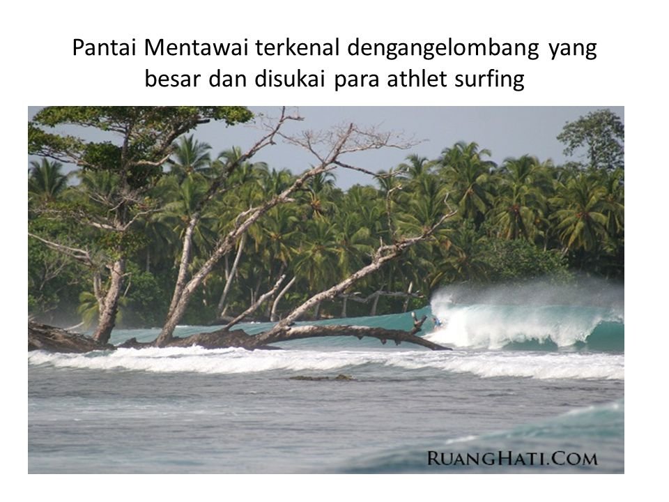 Pantai Mentawai terkenal dengangelombang yang besar dan disukai para athlet surfing