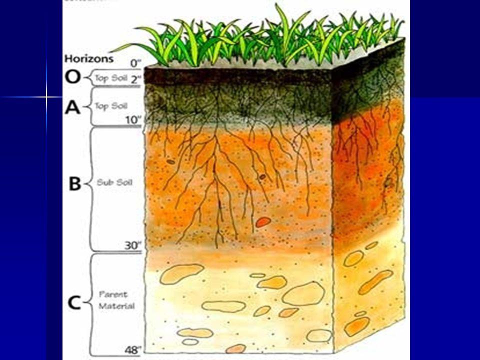 4.REGOLIT: Bahan 2 lepas (termasuk tanah) di atas batuan keras, 5.SOLUM TANAH: Horizon tanah di atas bahan induk yg terdiri dari horizon O, A & horizon B, 6.KEDALAMAN EFEKTIF TANAH: Kedalaman tanah yg masih dapat ditembus akar tnm, 7.TOP SOIL: Lapisan tanah teratas yg biasanya andung bahan organik & berwarna gelap & subur setebal sampai 25 cm yg sering disebut lapisan olah tanah, 8.SUB SOIL: Lapisan bawah permukaan dg sedikit bahan organik (kurang subur) & lebih tebal dari top soil.