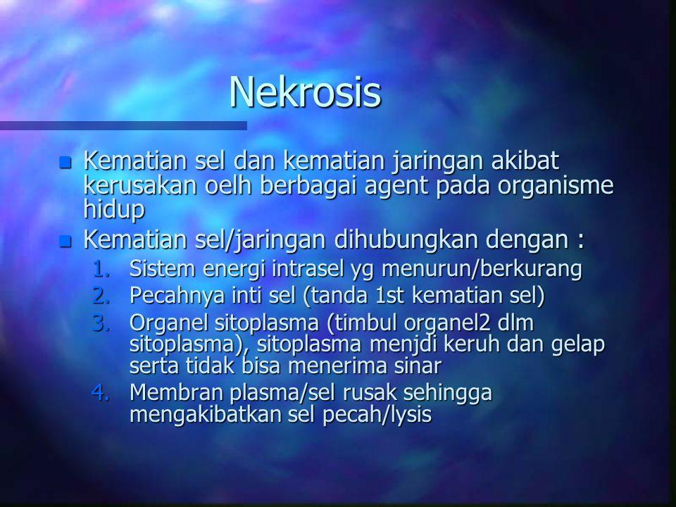 Nekrosis n Kematian sel dan kematian jaringan akibat kerusakan oelh berbagai agent pada organisme hidup n Kematian sel/jaringan dihubungkan dengan : 1