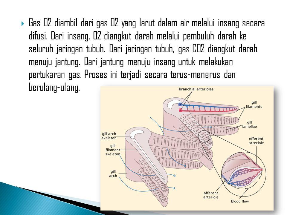  Gas O2 diambil dari gas O2 yang larut dalam air melalui insang secara difusi. Dari insang, O2 diangkut darah melalui pembuluh darah ke seluruh jarin