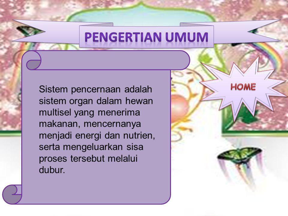 Sistem pencernaan adalah sistem organ dalam hewan multisel yang menerima makanan, mencernanya menjadi energi dan nutrien, serta mengeluarkan sisa pros
