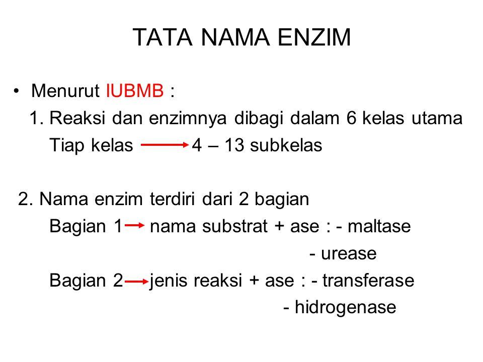 ENZIM BEREAKSI SPESIFIK Artinya : suatu enzim hanya dapat bereaksi dengan substrat tertentu atau pada sejumlah senyawa sejenis Contoh : laktase 1. Lak
