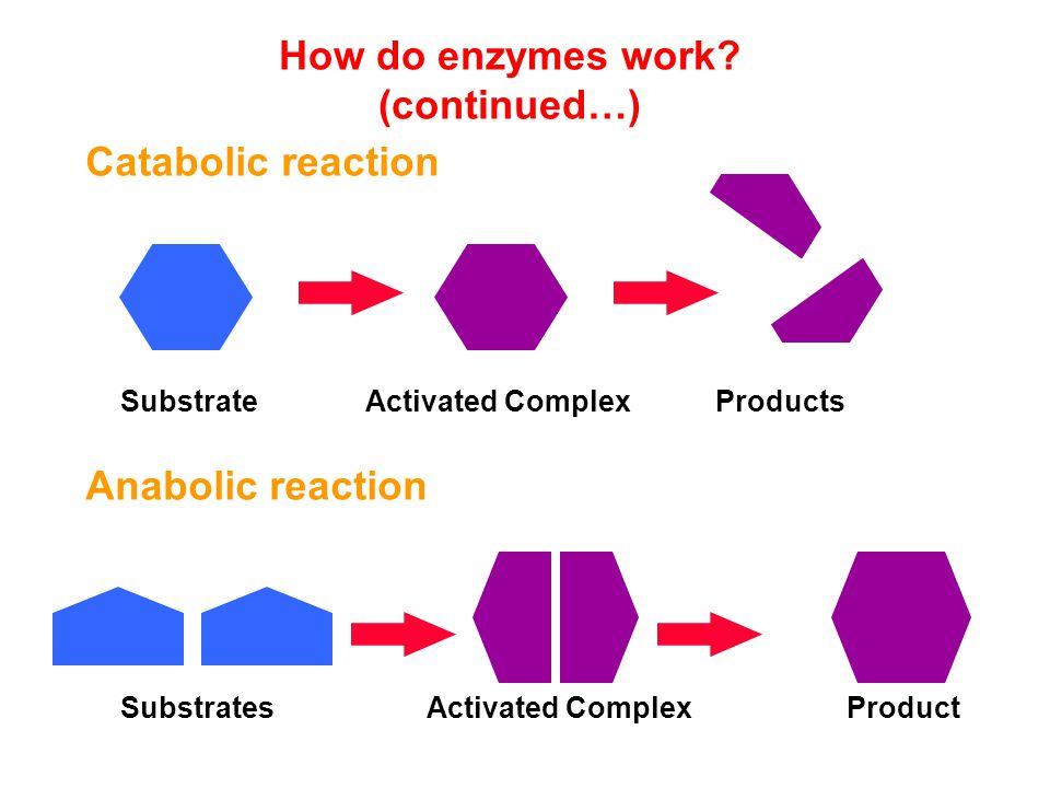 6. LIGASE Mengkatalisis penggabungan 2 senyawa yg di- kaitkan dgn pemutusan ikatan pirofosfat pada ATP atau senyawa sejenis Contoh : Glutamin sintetas