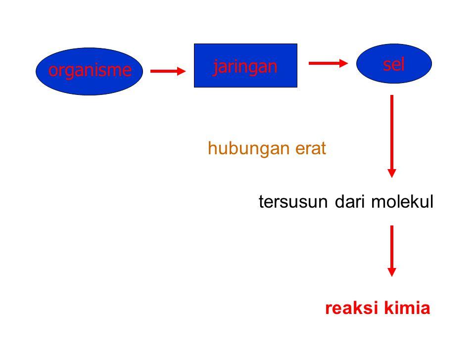 ENZIM Kadek Rachmawati, M.Kes., Drh