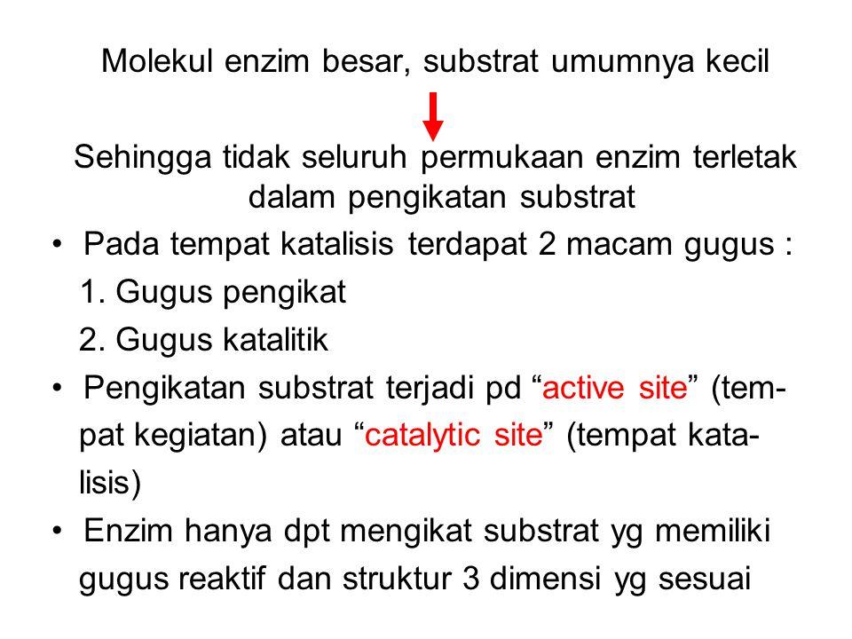 KOMPLEKS ENZIM - SUBSTRAT KOMPLEKS ENZIM SUBSTRAT SUBSTRAT PRODUK ENZIM ENZIM+SUBSTRAT ENZIM SETELAH SUBSTRAT BERIKATAN ENZIM KATALISIS