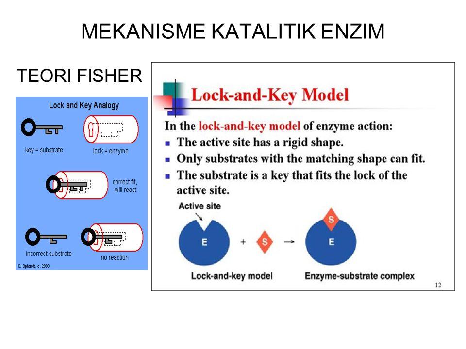 Molekul enzim besar, substrat umumnya kecil Sehingga tidak seluruh permukaan enzim terletak dalam pengikatan substrat Pada tempat katalisis terdapat 2