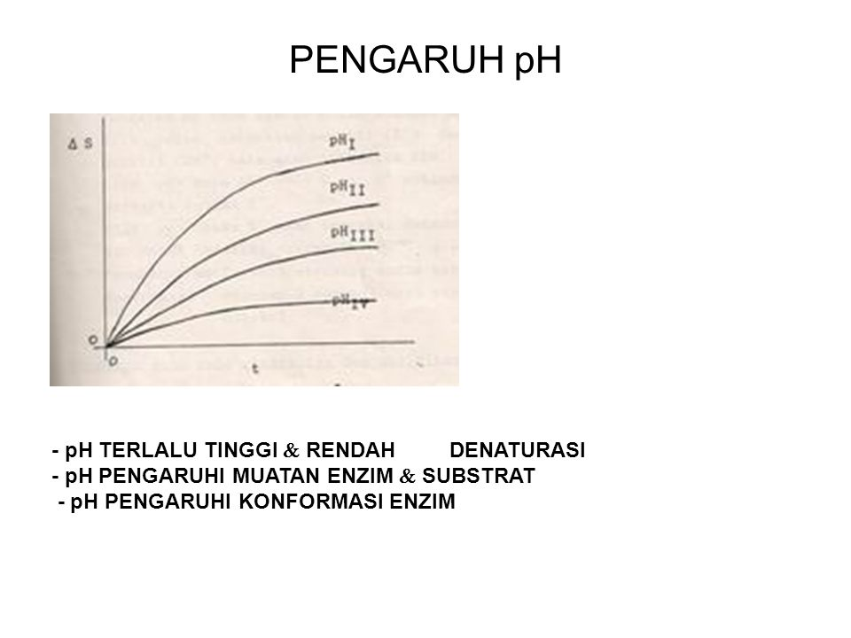 PENGARUH pH The precise three- dimensional molecular shape which is vital to the functioning of enzymes is partly the result of hydrogen bonding; H + ions may break these bonding and change the shape of the molecule.