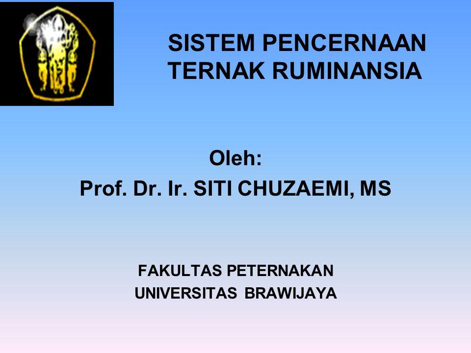 SISTEM PENCERNAAN TERNAK RUMINANSIA Oleh: Prof. Dr. Ir. SITI CHUZAEMI, MS FAKULTAS PETERNAKAN UNIVERSITAS BRAWIJAYA