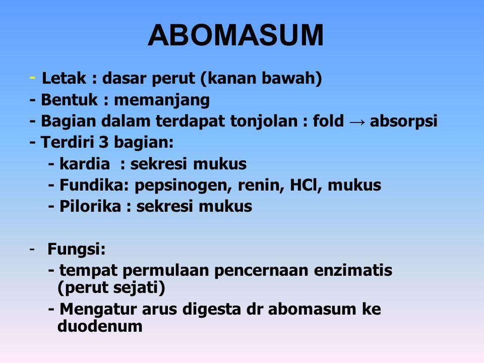 ABOMASUM - Letak : dasar perut (kanan bawah) - Bentuk : memanjang - Bagian dalam terdapat tonjolan : fold → absorpsi - Terdiri 3 bagian: - kardia : se