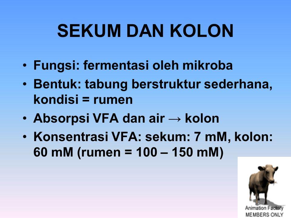 SEKUM DAN KOLON Fungsi: fermentasi oleh mikroba Bentuk: tabung berstruktur sederhana, kondisi = rumen Absorpsi VFA dan air → kolon Konsentrasi VFA: se