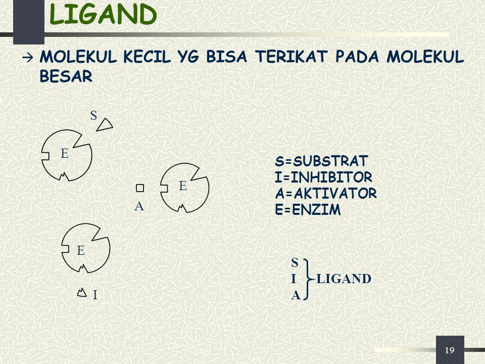 19 LIGAND  MOLEKUL KECIL YG BISA TERIKAT PADA MOLEKUL BESAR S=SUBSTRAT I=INHIBITOR A=AKTIVATOR E=ENZIM S I LIGAND A E A E I E S