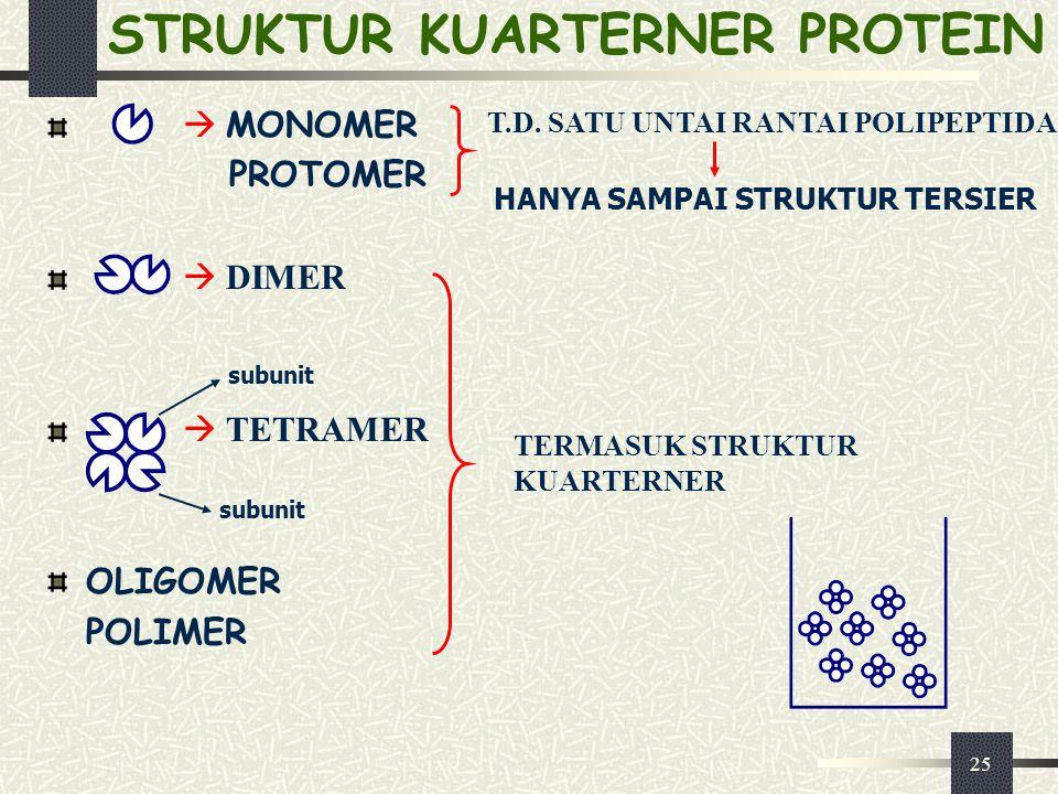 25 STRUKTUR KUARTERNER PROTEIN  MONOMER PROTOMER  DIMER  TETRAMER OLIGOMER POLIMER subunit TERMASUK STRUKTUR KUARTERNER T.D. SATU UNTAI RANTAI POLI