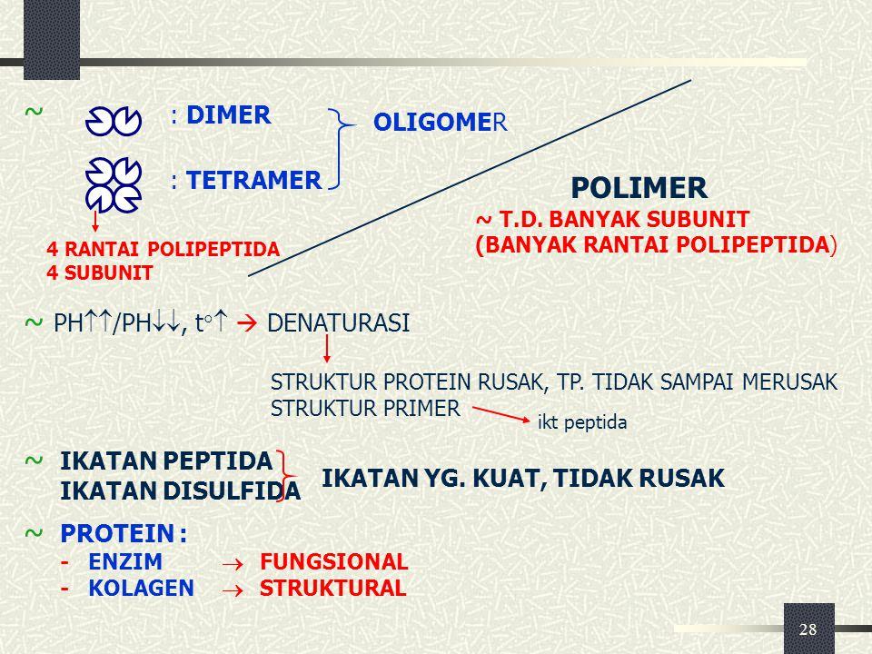 28 ~ PH  /PH , t   DENATURASI POLIMER ~ T.D. BANYAK SUBUNIT (BANYAK RANTAI POLIPEPTIDA) ~ : DIMER : TETRAMER OLIGOMER 4 RANTAI POLIPEPTIDA 4 SU