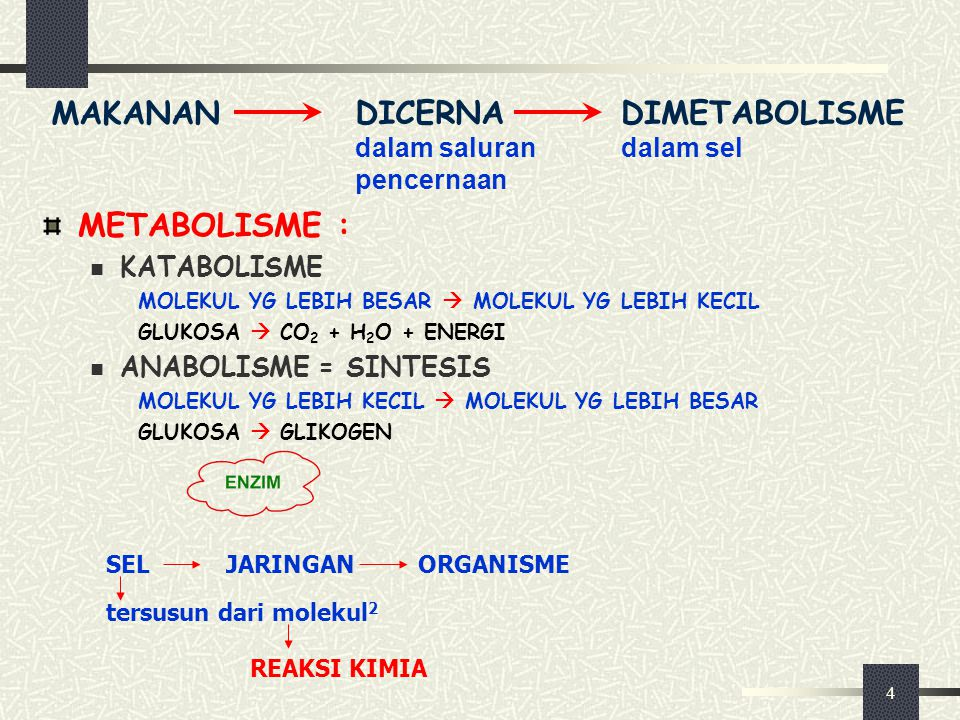 4 METABOLISME : KATABOLISME MOLEKUL YG LEBIH BESAR  MOLEKUL YG LEBIH KECIL GLUKOSA  CO 2 + H 2 O + ENERGI ANABOLISME = SINTESIS MOLEKUL YG LEBIH KEC
