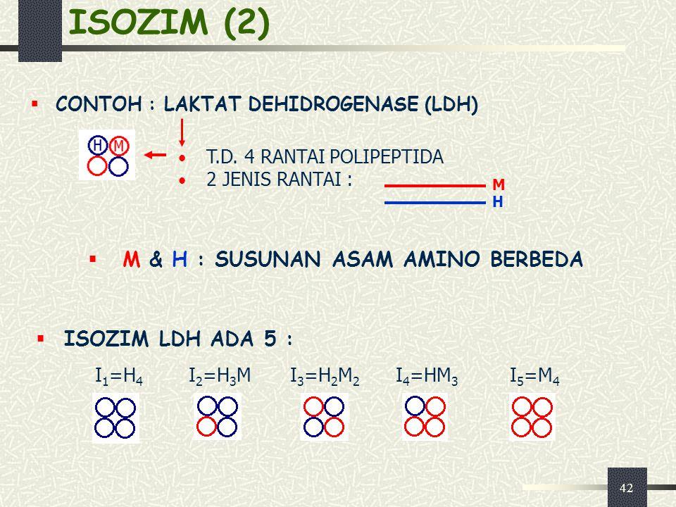 42 ISOZIM (2)  CONTOH : LAKTAT DEHIDROGENASE (LDH)  M & H : SUSUNAN ASAM AMINO BERBEDA T.D. 4 RANTAI POLIPEPTIDA 2 JENIS RANTAI : H M  ISOZIM LDH A
