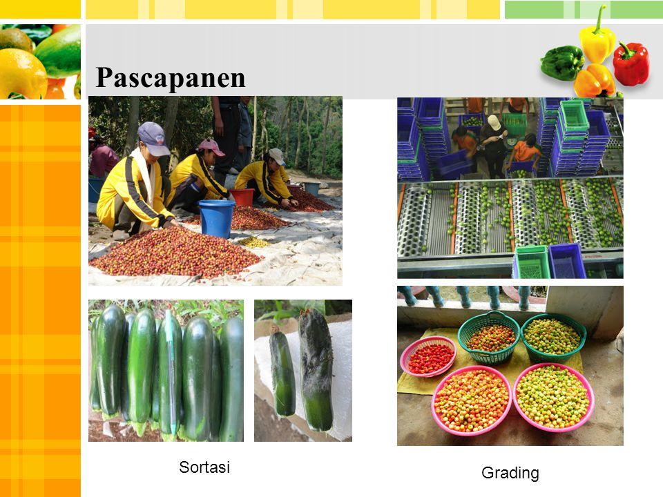4 5 Pascapanen Sortasi Grading