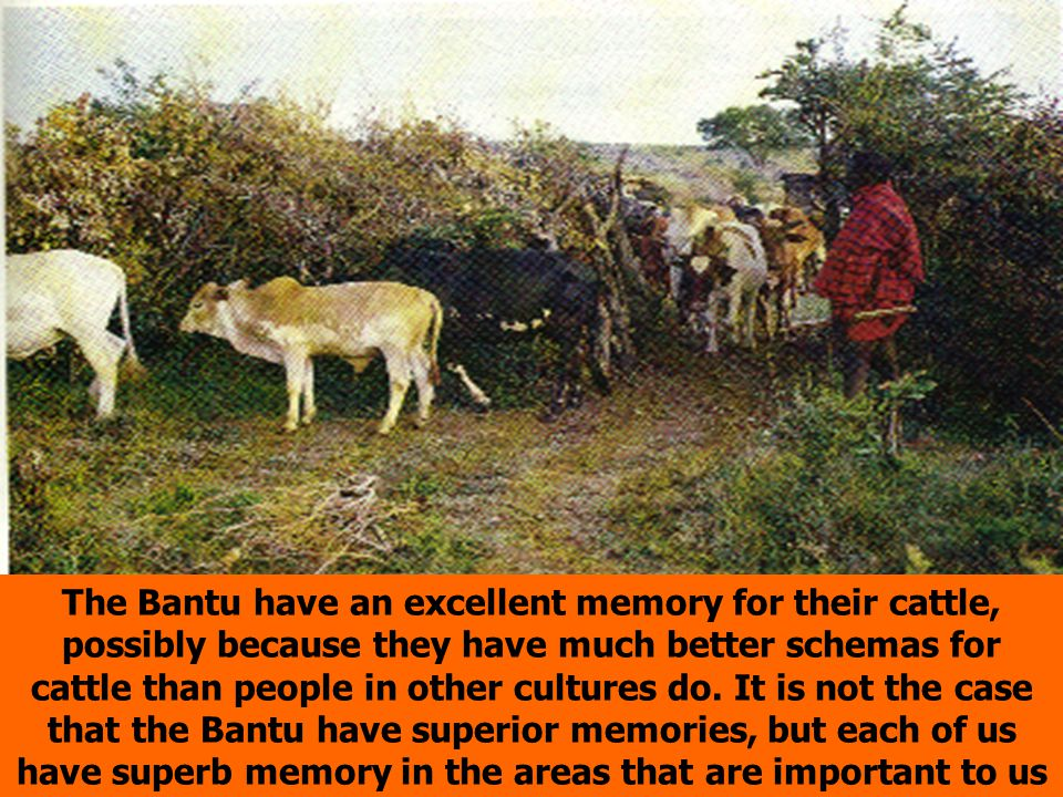 The Bantu have an excellent memory for their cattle, possibly because they have much better schemas for cattle than people in other cultures do. It is