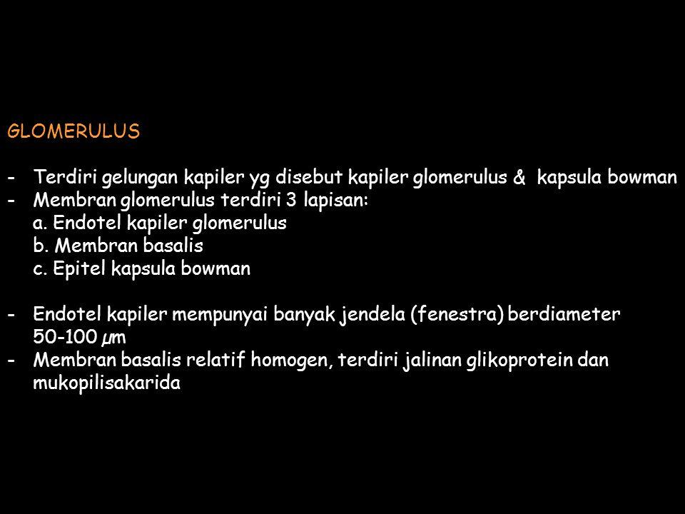 GLOMERULUS -Terdiri gelungan kapiler yg disebut kapiler glomerulus & kapsula bowman -Membran glomerulus terdiri 3 lapisan: a. Endotel kapiler glomerul