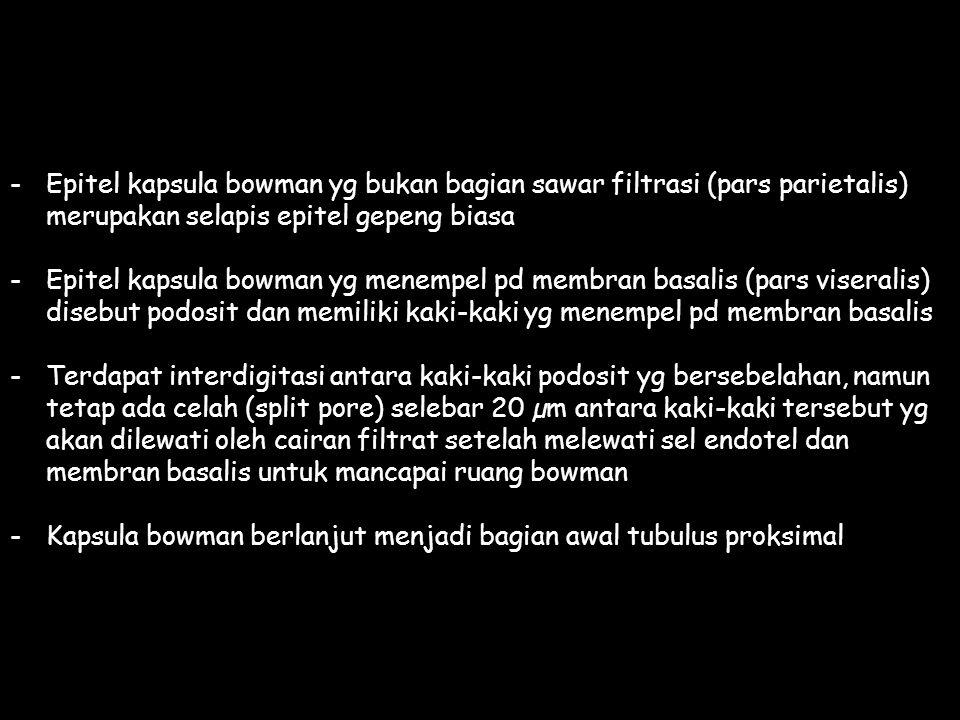-Epitel kapsula bowman yg bukan bagian sawar filtrasi (pars parietalis) merupakan selapis epitel gepeng biasa -Epitel kapsula bowman yg menempel pd me