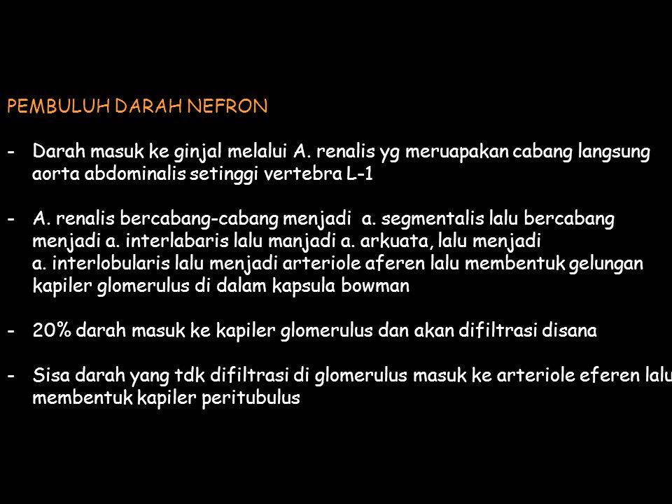 PEMBULUH DARAH NEFRON -Darah masuk ke ginjal melalui A. renalis yg meruapakan cabang langsung aorta abdominalis setinggi vertebra L-1 -A. renalis berc