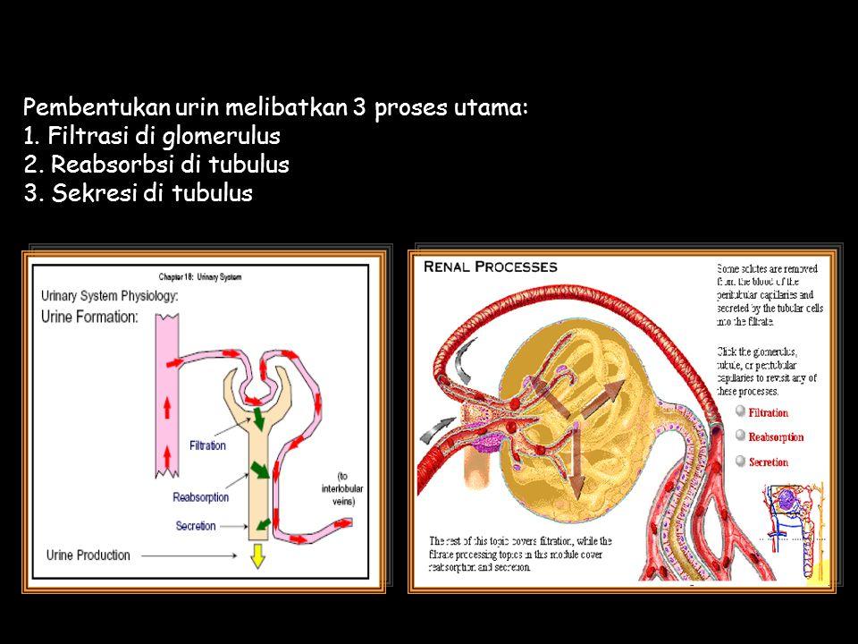 Pembentukan urin melibatkan 3 proses utama: 1. Filtrasi di glomerulus 2. Reabsorbsi di tubulus 3. Sekresi di tubulus