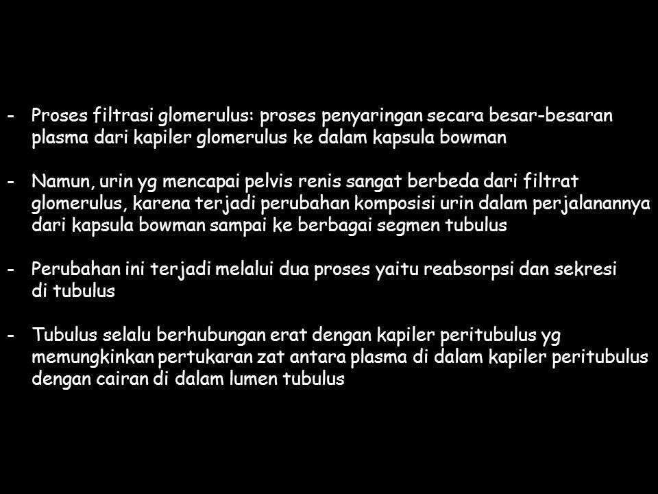 -Proses filtrasi glomerulus: proses penyaringan secara besar-besaran plasma dari kapiler glomerulus ke dalam kapsula bowman -Namun, urin yg mencapai pelvis renis sangat berbeda dari filtrat glomerulus, karena terjadi perubahan komposisi urin dalam perjalanannya dari kapsula bowman sampai ke berbagai segmen tubulus -Perubahan ini terjadi melalui dua proses yaitu reabsorpsi dan sekresi di tubulus -Tubulus selalu berhubungan erat dengan kapiler peritubulus yg memungkinkan pertukaran zat antara plasma di dalam kapiler peritubulus dengan cairan di dalam lumen tubulus